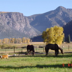 Wolf Creek Mountain Folk